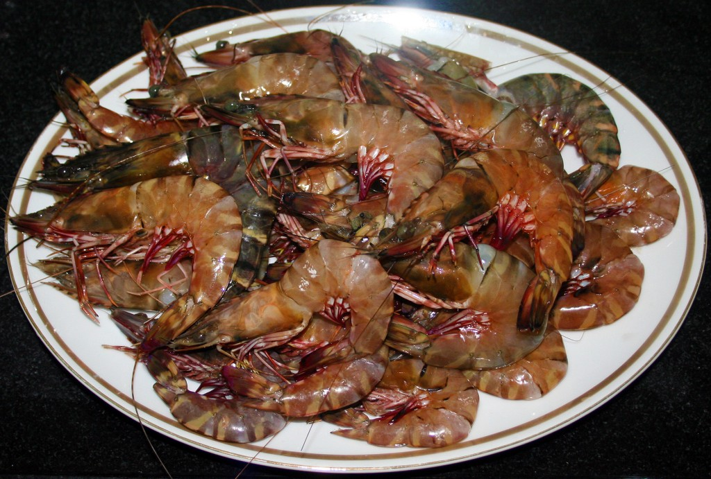 Prawns Fresh From The Seafront