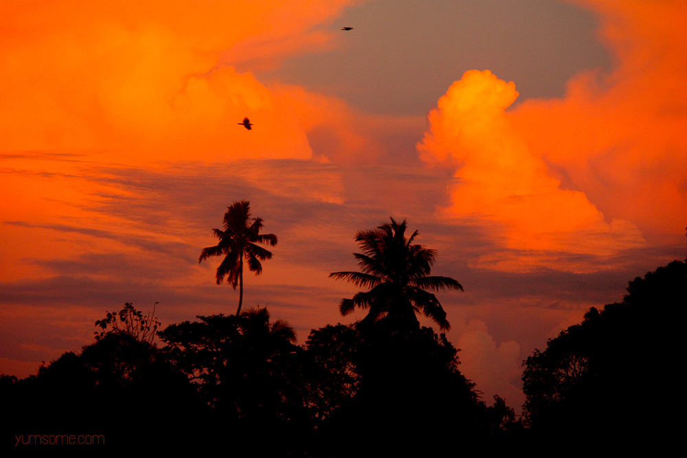 alleppey beach sunset