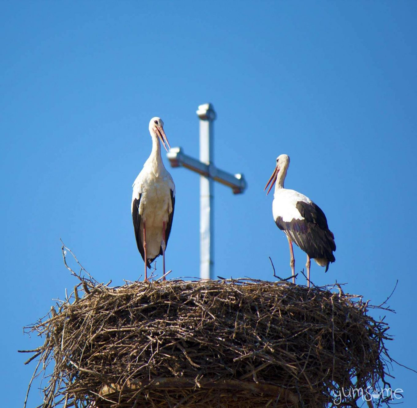 Romania is full of storks, like these ones outside a church | ©2016 yumsome.com