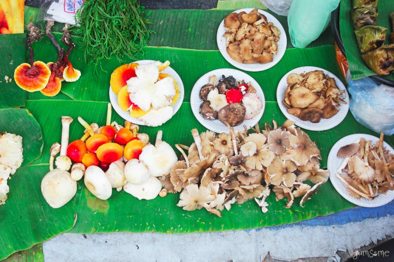 Freshly-picked mushrooms on sale at for sale at Kad Ton Payom, Chiang Mai. | yumsome.com