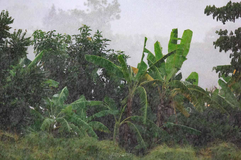 Rainy season in Mae Hee, Northern Thailand | yumsome.com