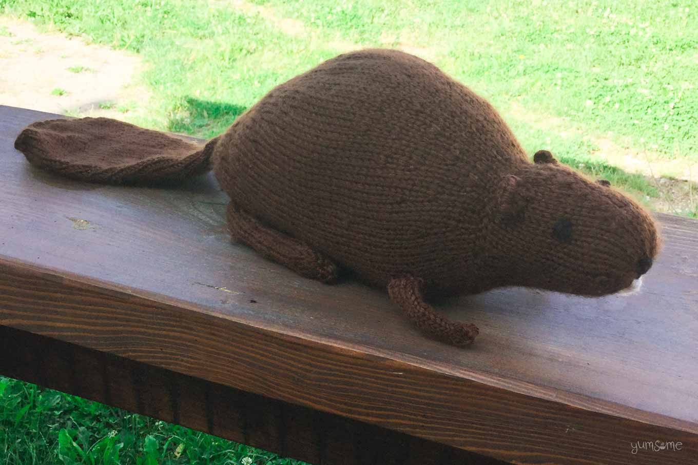 Nora the beaver, sitting on a wooden fence.
