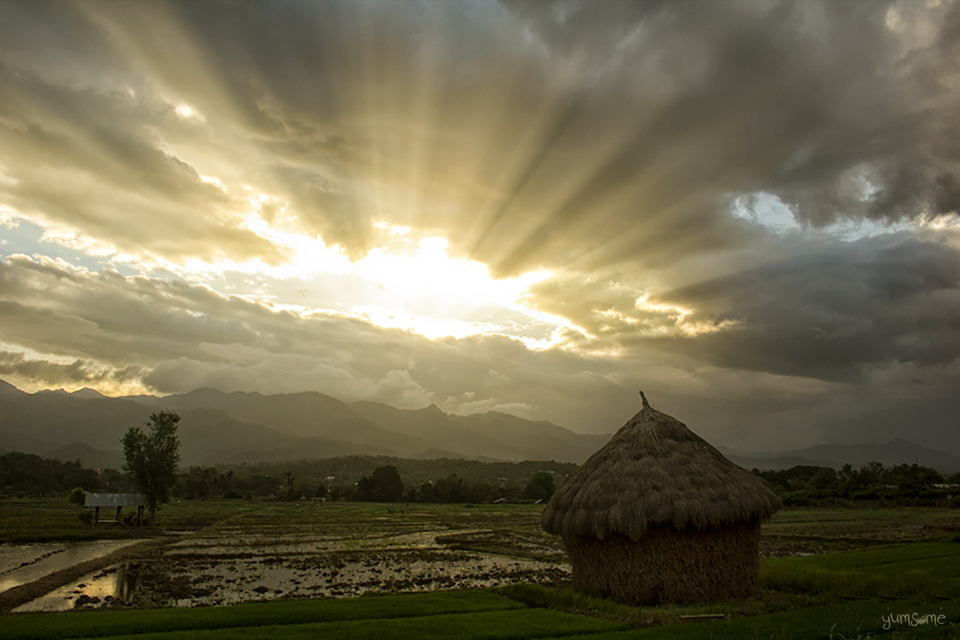 Rays of sunlight over a wet rice field and a haystack.