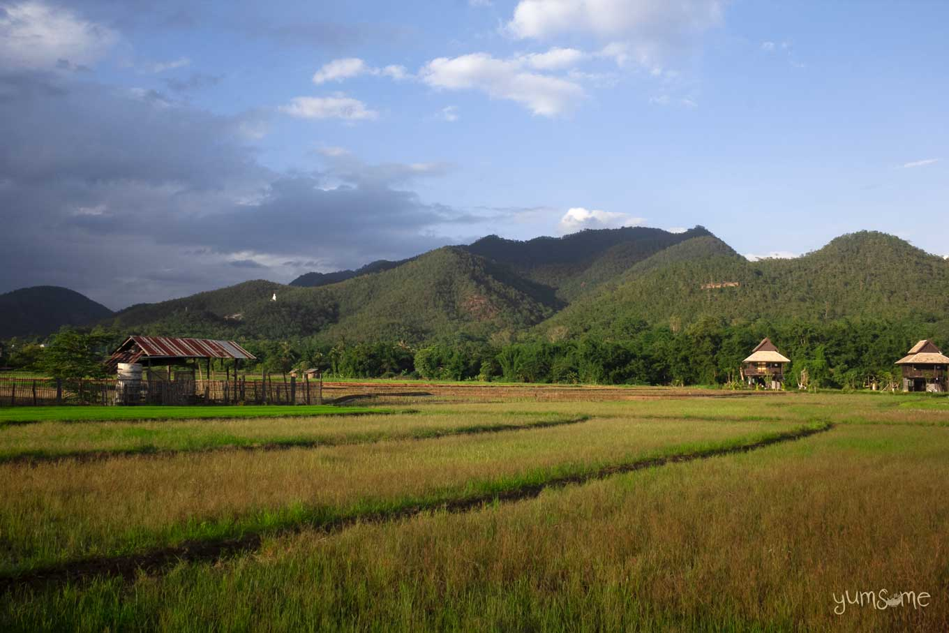 Rice fields in Northern Thailand with mountains in the background.