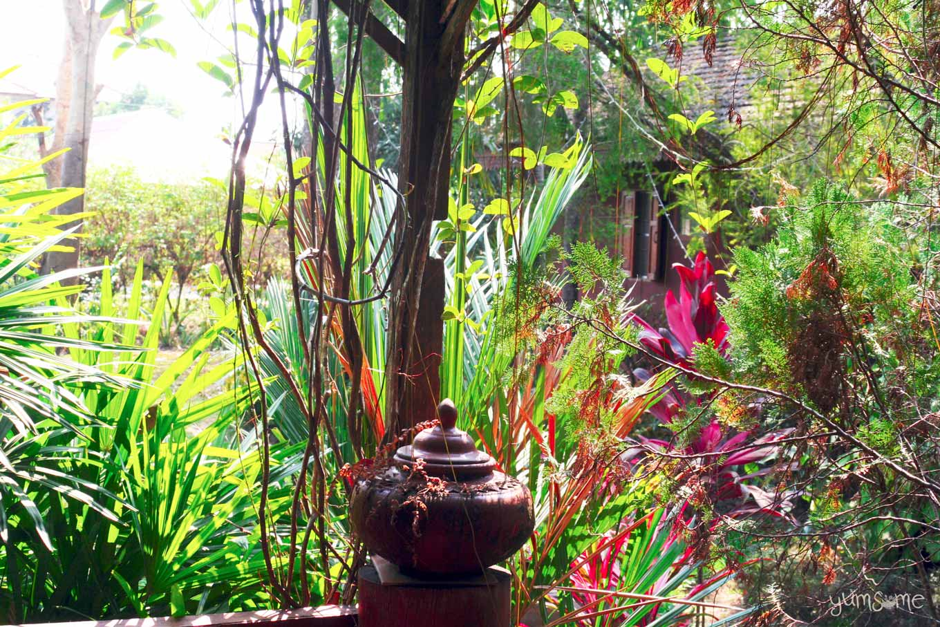 Tropical trees and plants with a large brown pot in the centre.