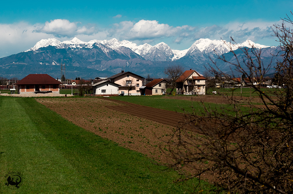 A view of some newly-sown strip farms, with Alpine houses and snow-topped Slovenian Alps in the background.